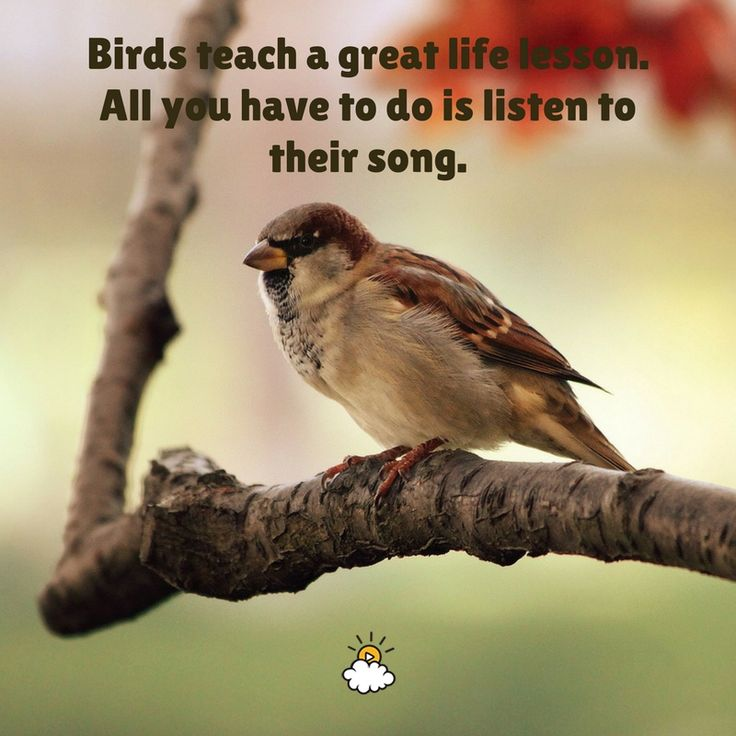 """Inspirational Quotes : """"Birds Teach A Great Life Lesson"""