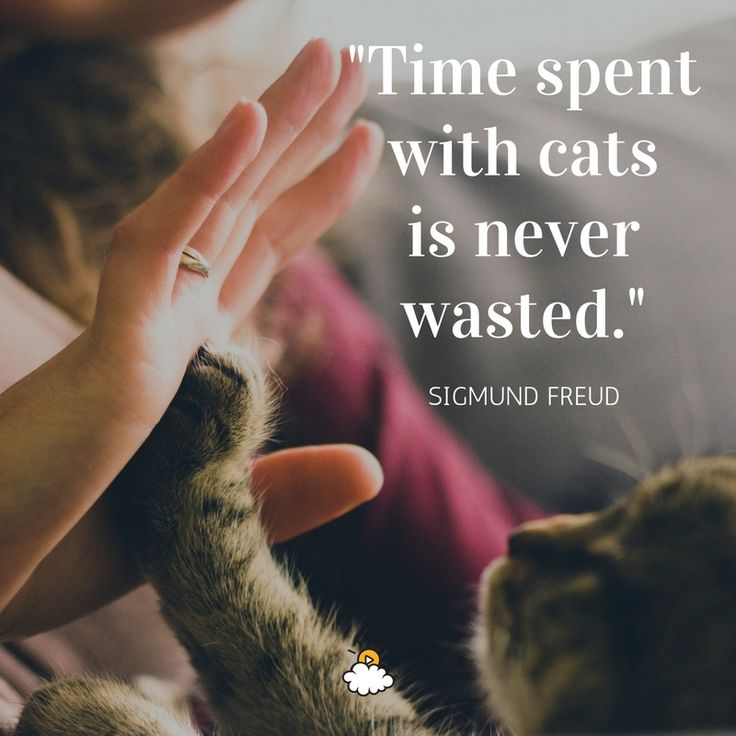 inspirational quotes time spent cats is never wasted
