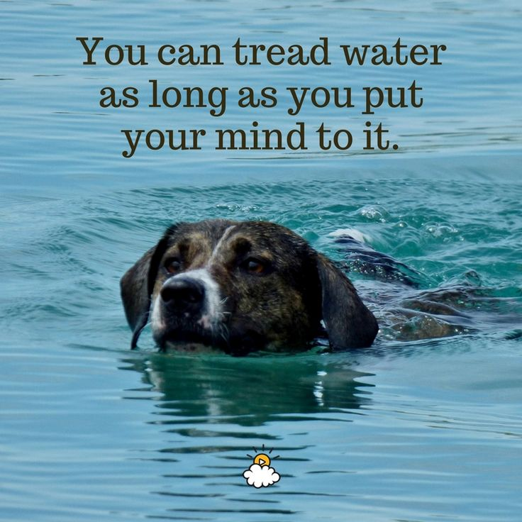 Inspirational Quotes You Can Tread Water As Long As You Put Your